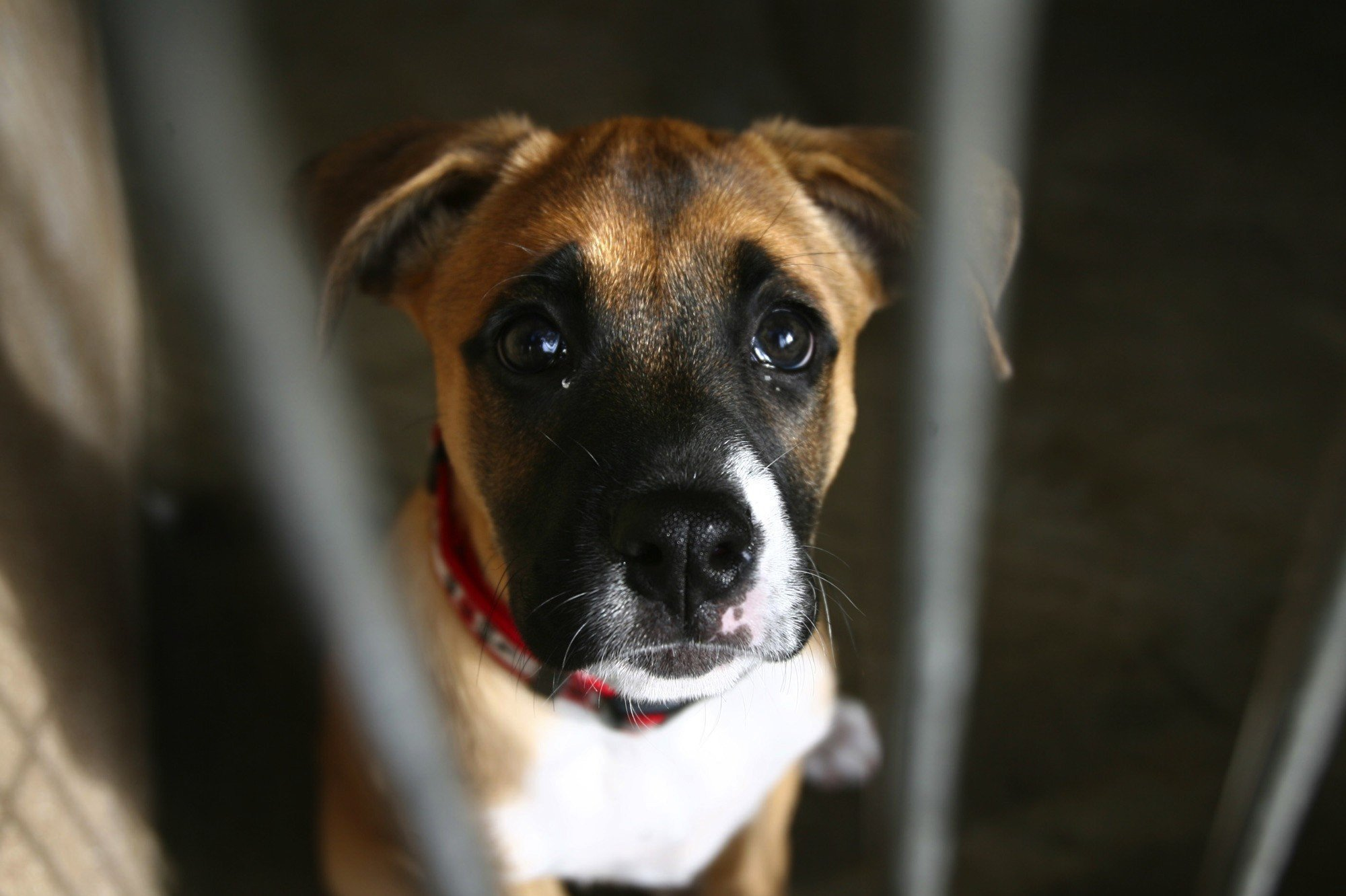 Progressive Near Me >> Irvine shelter ordered to stop euthanizing animals; director resigns - LA Times