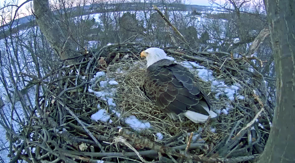 York County eagles caught on camera - The Morning Call