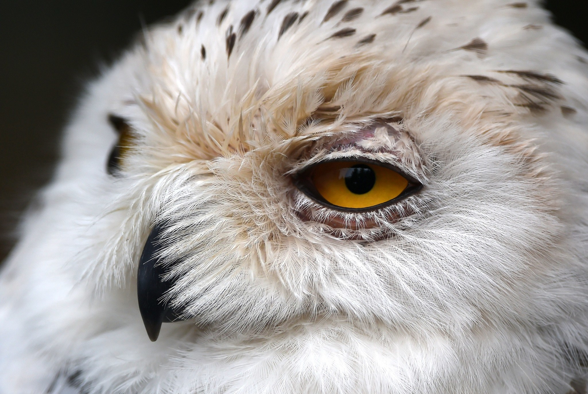 What To Do If You Hit A Bird Of Prey The Morning Call