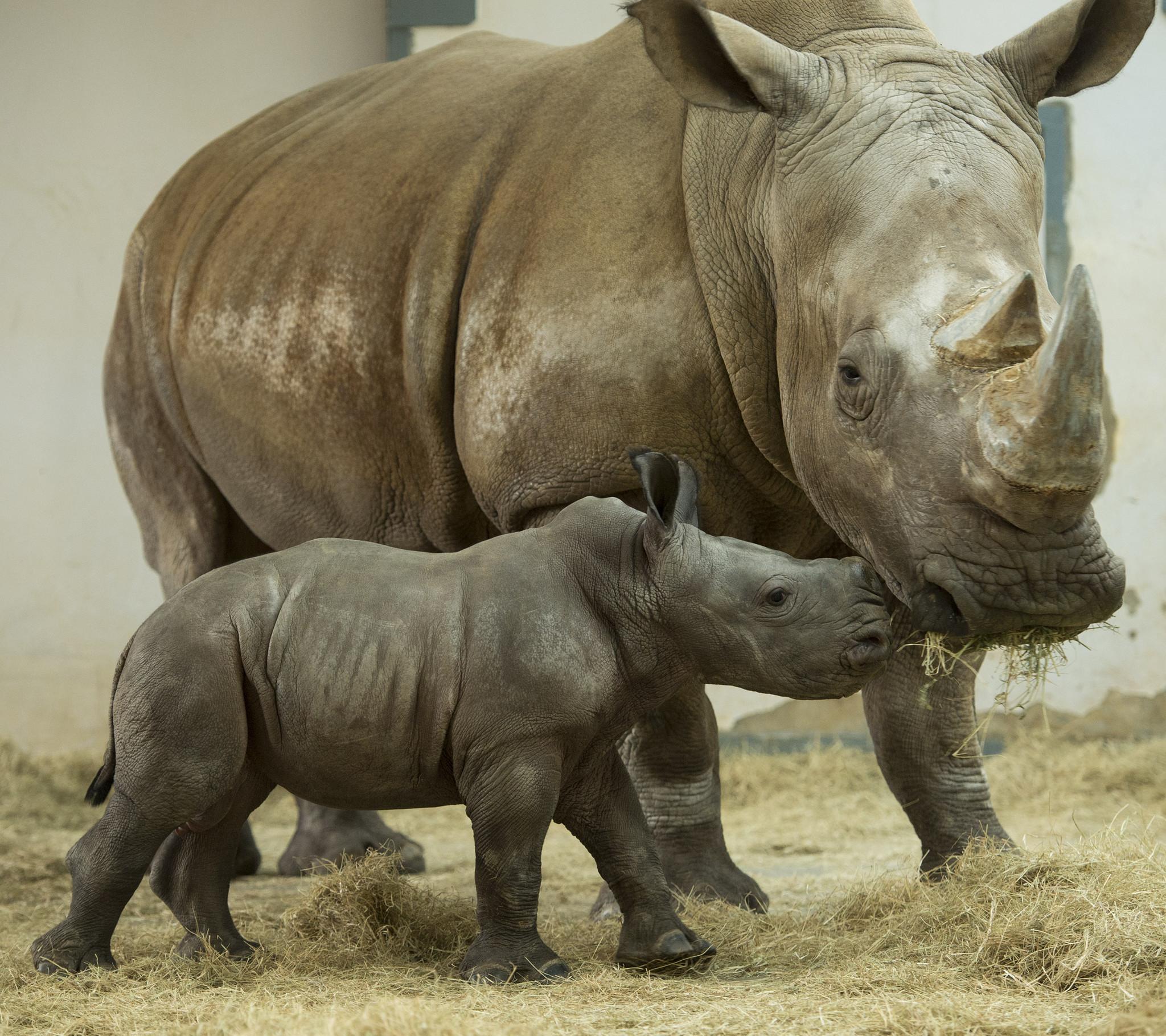 Animal Kingdom Discovery Cove Seek Help Naming 2 Baby