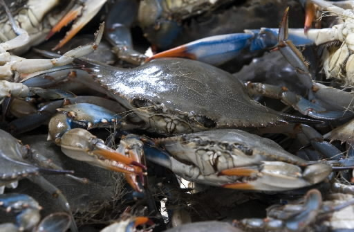 Welcome to Blue Crab Bay Co., Purveyor of Classic Coastal Cuisine Since 1985