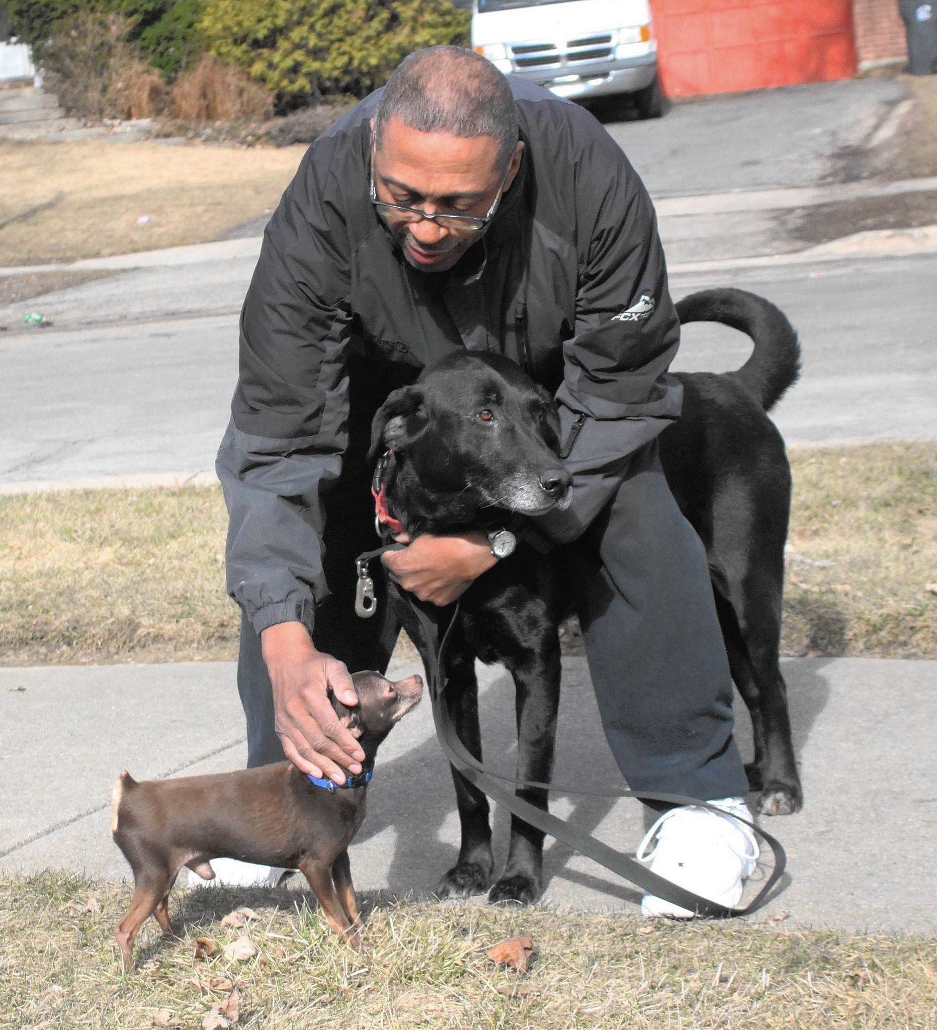 Lost Black Lab Dozens Of Pets Reunite With Owners Via Facebook Lake County News Sun