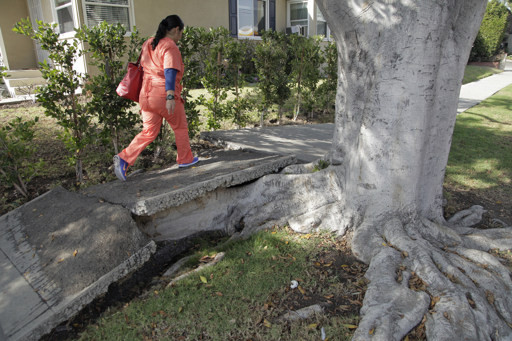 Los Angeles Fix The Sidewalks But Save The Trees La Times
