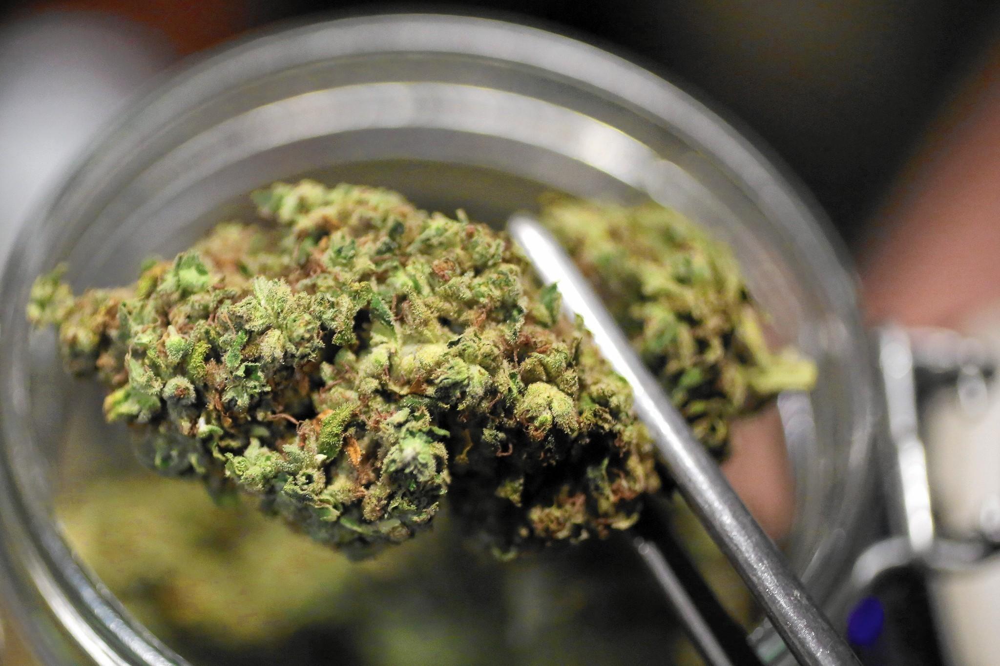 Купить марихуану цена отличия конопли сорной и посевной