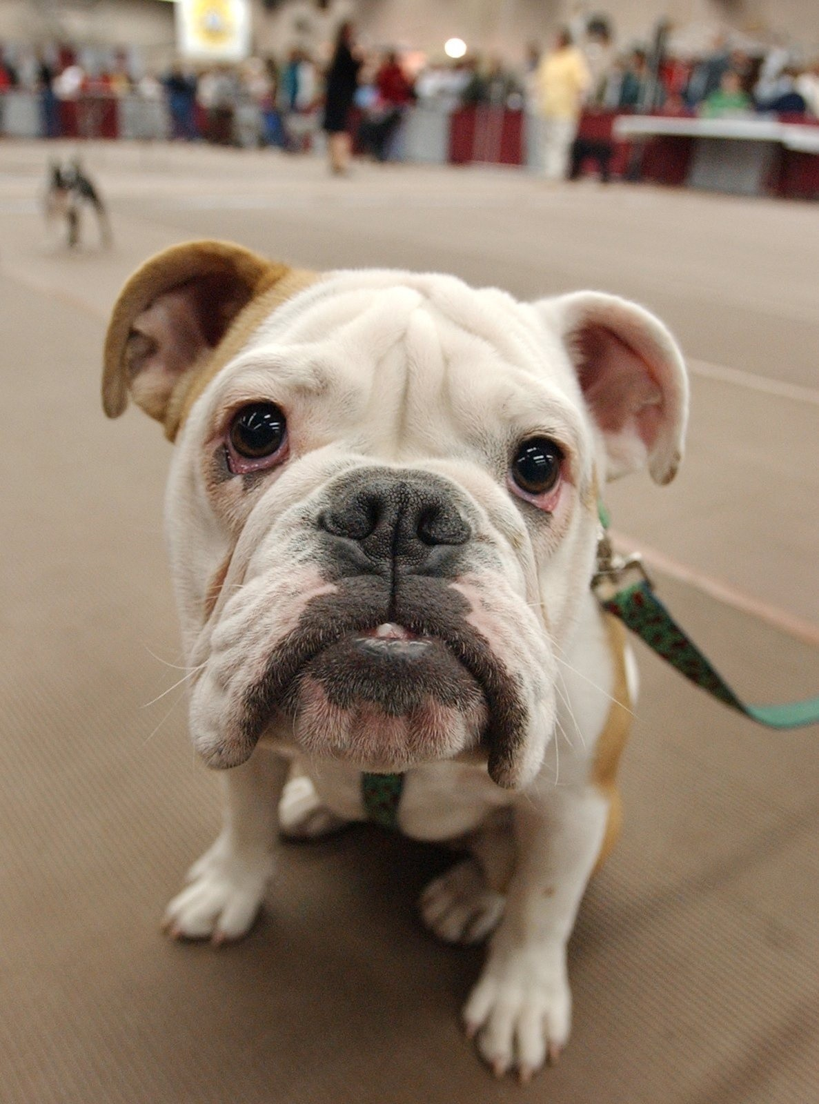 Scams Target Pet Lovers Baseball Fans And Credit Card