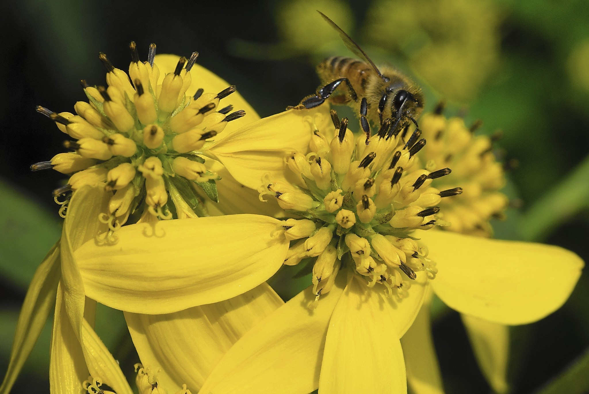 Ways To Control Spring Pollen And Allergens The Morning Call
