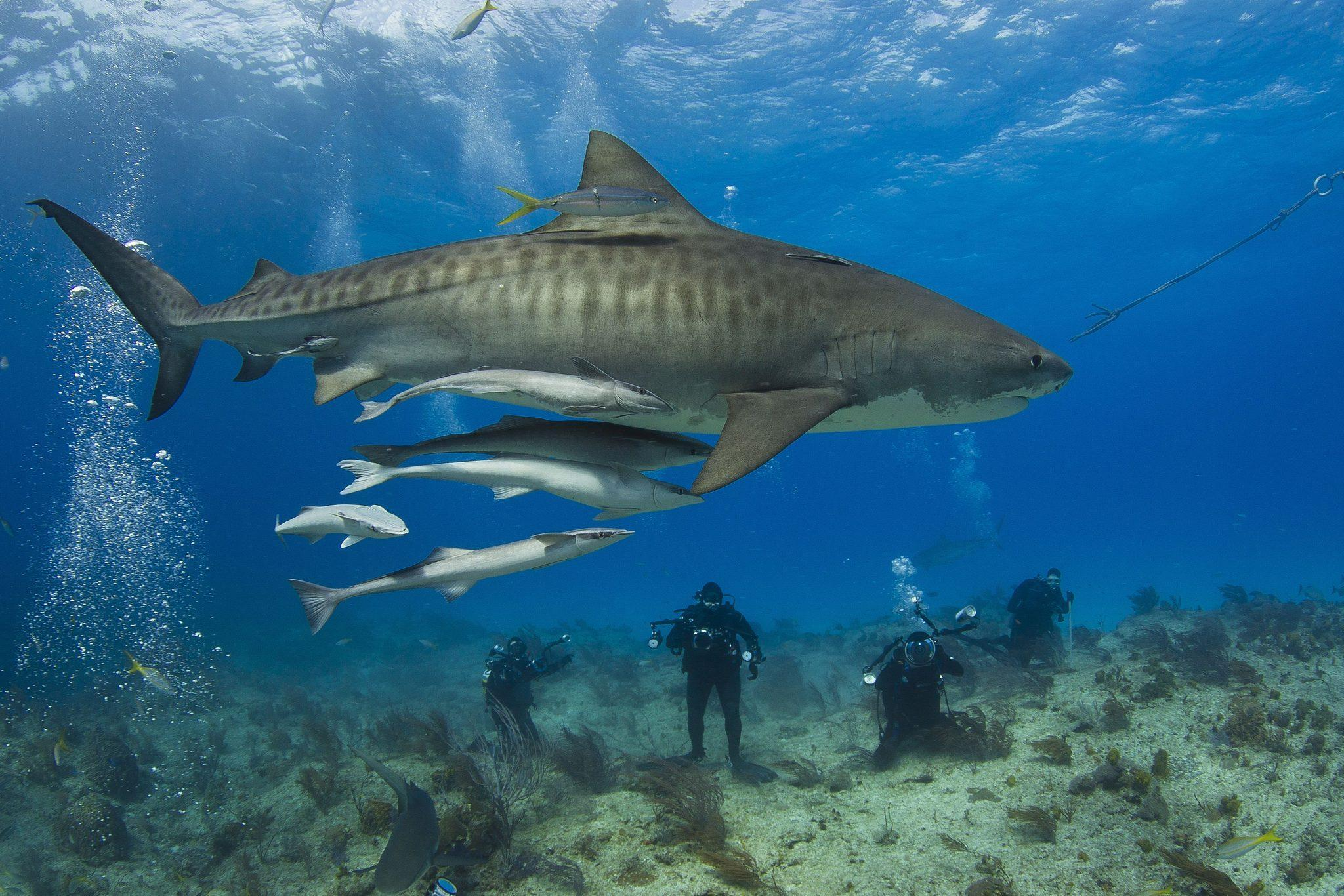 Sharks that can attack - Daily Press