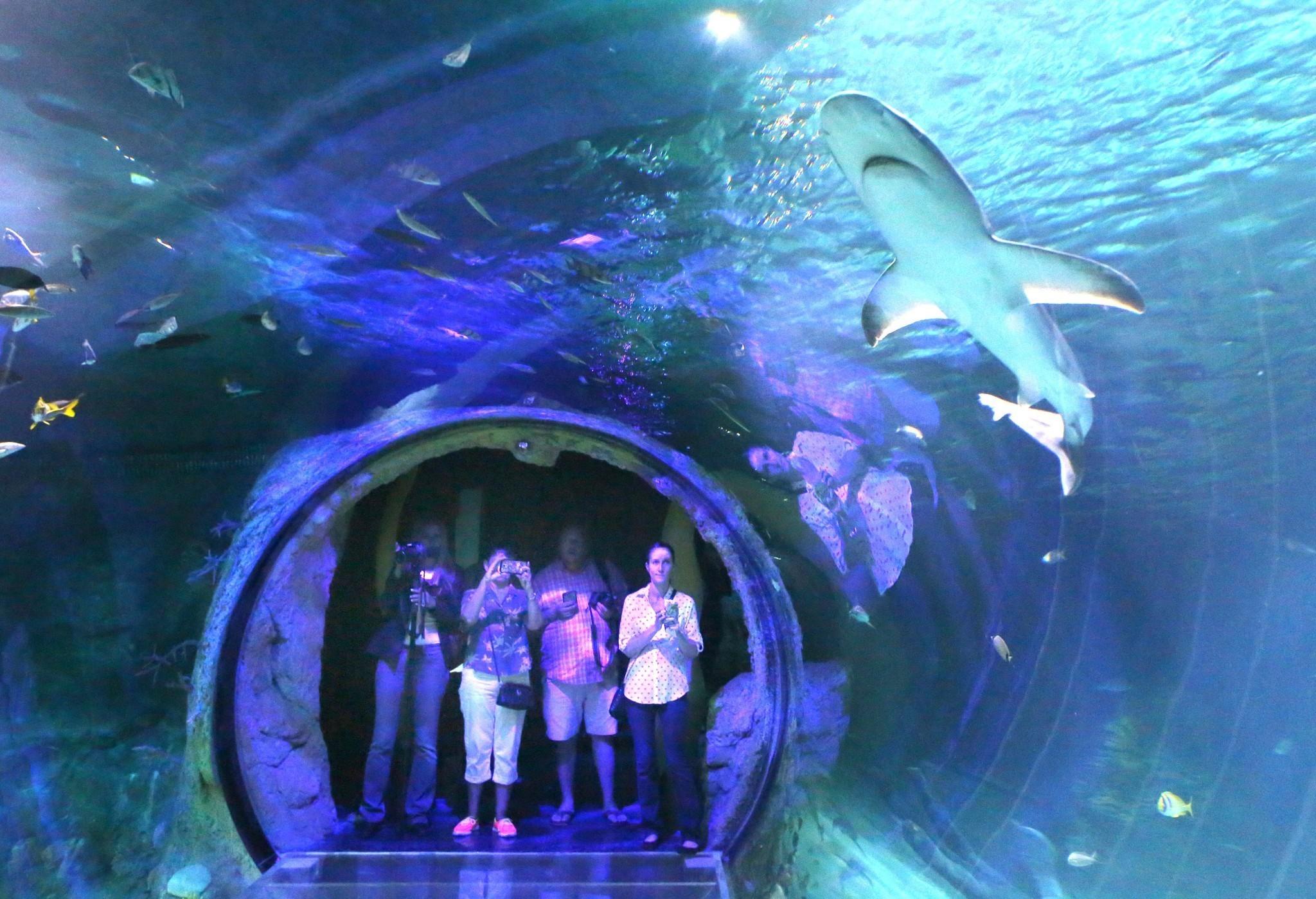Reviews >> Pictures: Sea Life aquarium at I-Drive 360 - Orlando Sentinel