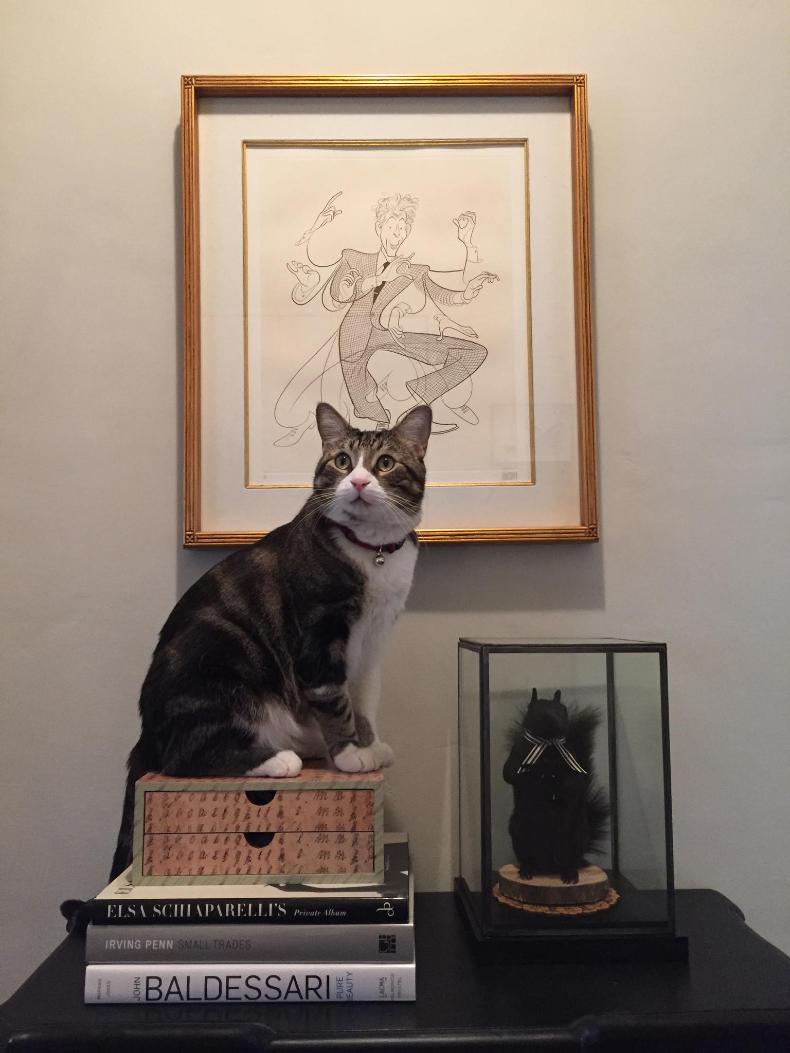 Los Angeles Times writer Mark Olsen's cat: Bosco V Brosio.