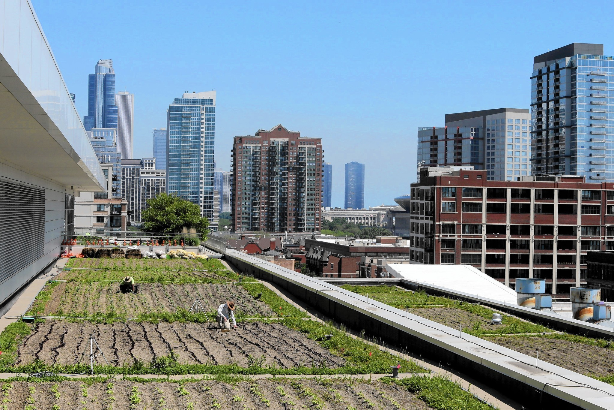 Rooftop Farms Appealing But Will They Catch On Chicago