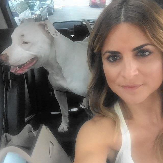 Kitchen Crashers Hgtv: HGTV Host Rescues Pit Bull Caught In Traffic