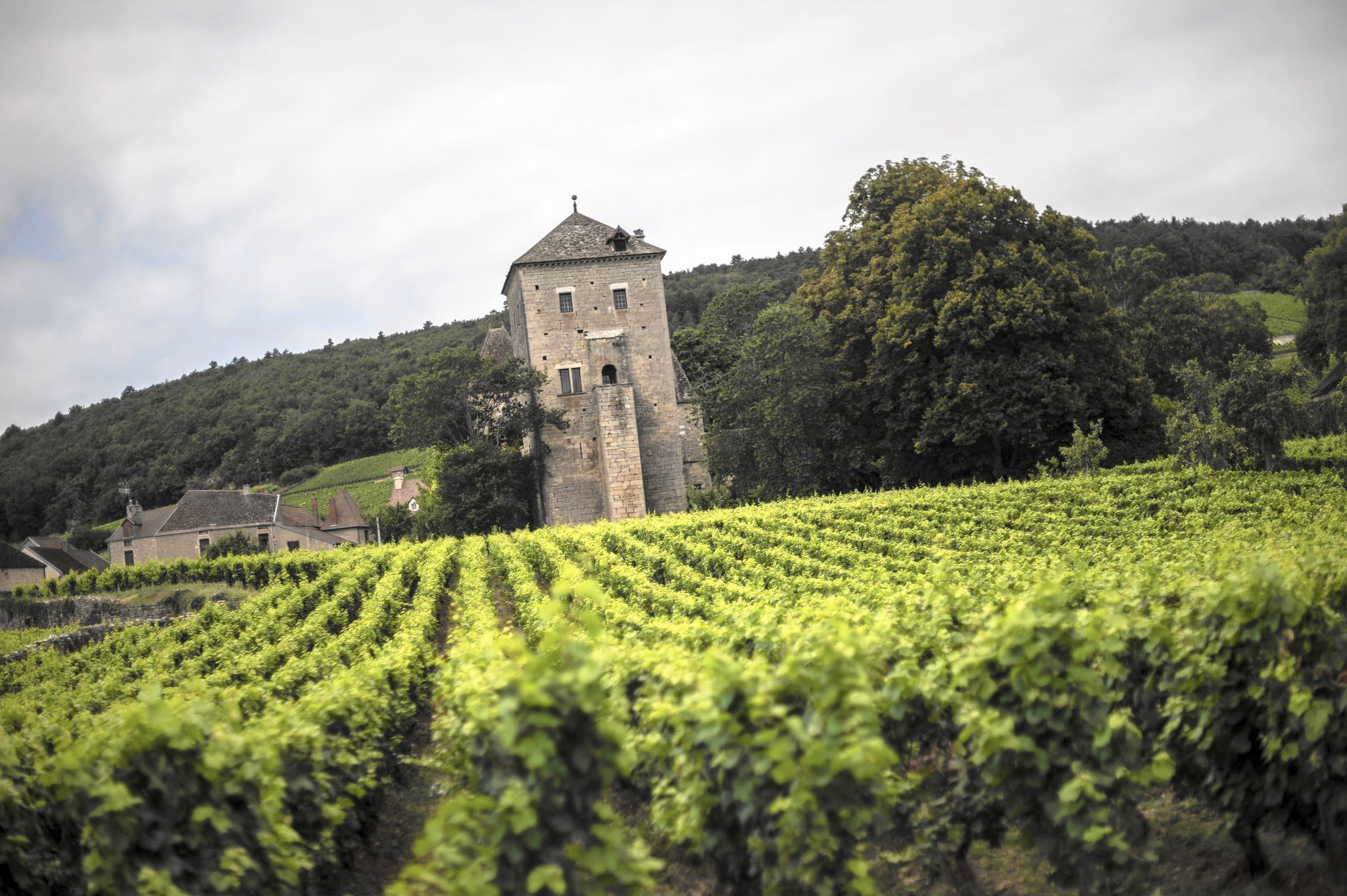 Compare French And California Wines And See What You