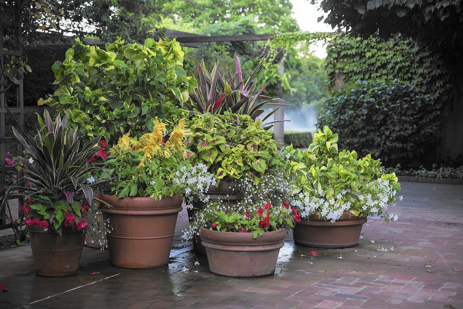 No Petunias Were Harmed In >> Annual Plants In Garden Suffering From Cold Rainy Spring And Summer