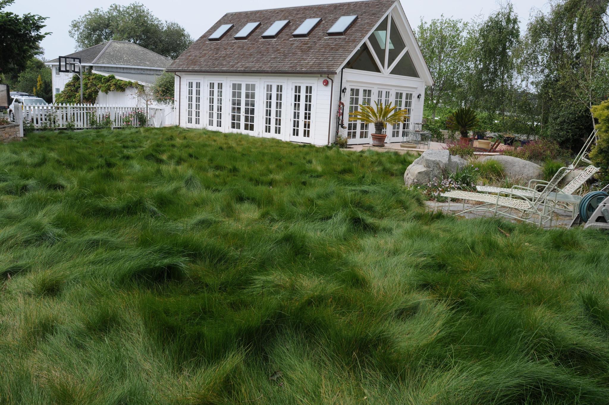 Native Mow Free grass