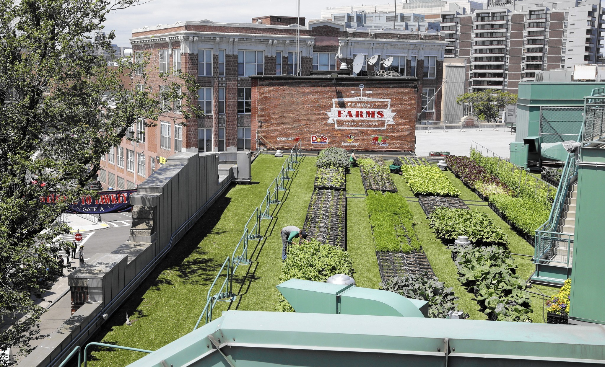 Fenway Has It S Own Farm System On The Roof Hartford