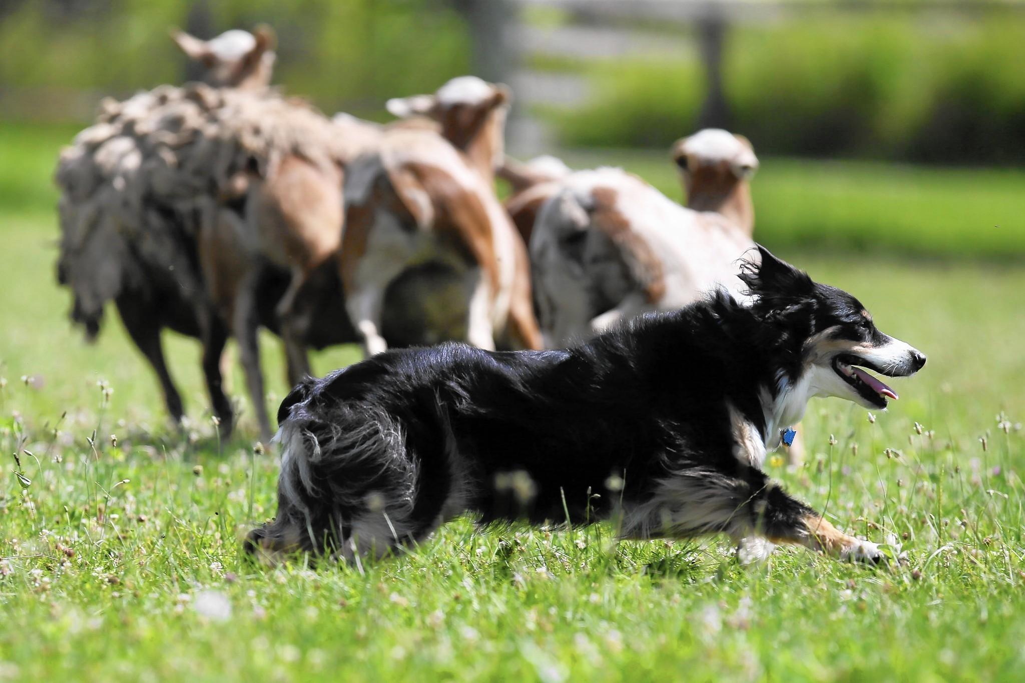 The World of Farm Dogs | Devon Farms Blog |Small Dogs Farm