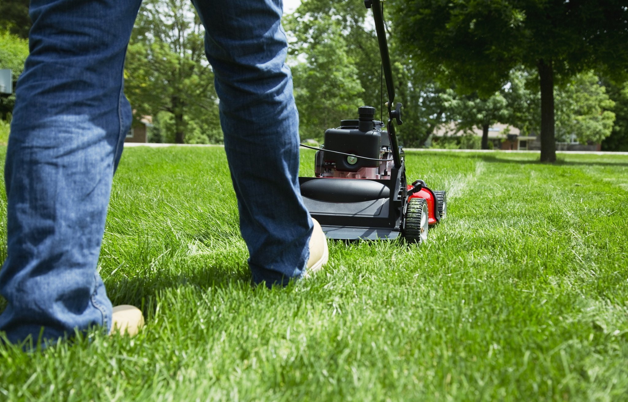 Lawns Are A Soul Crushing Timesuck And Most Of Us Would Be