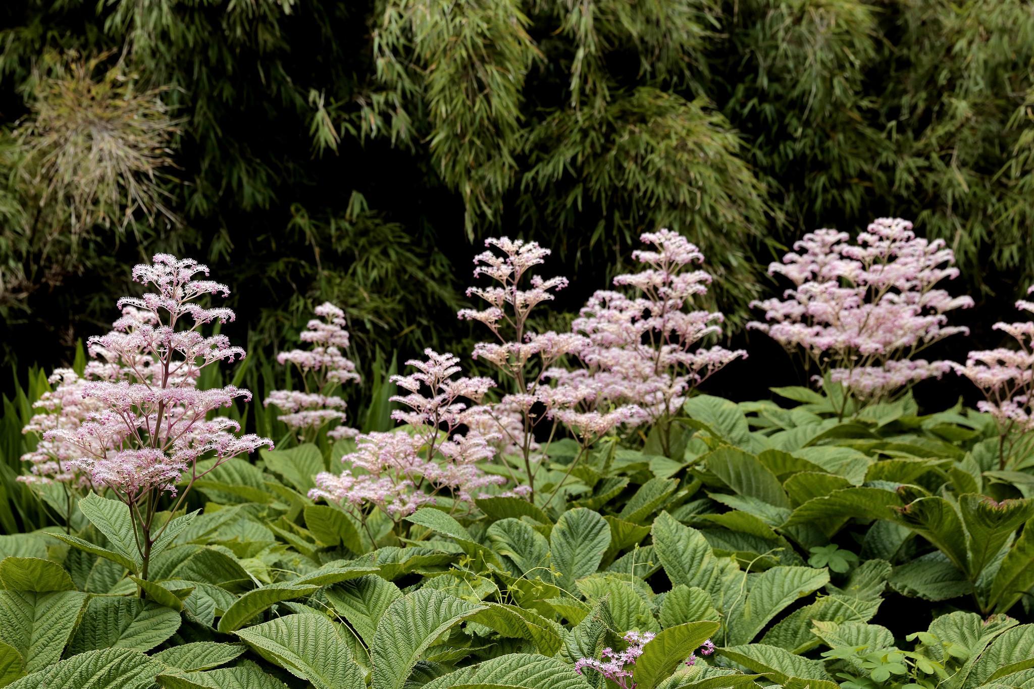 Edinburgh's Royal Botanic Garden.