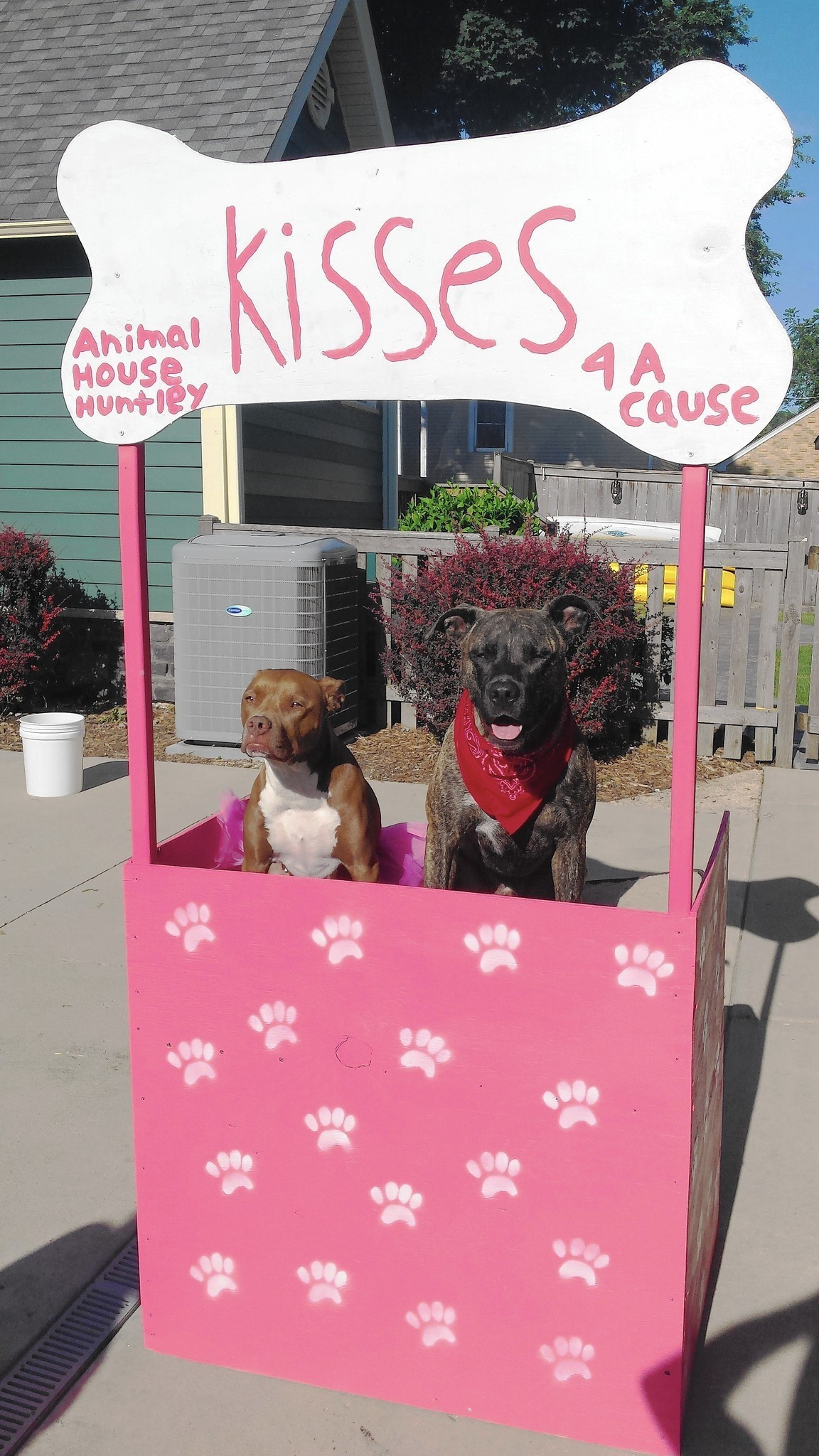 Dog to pucker up in kissing booth at Rosie O'Hare's event ...