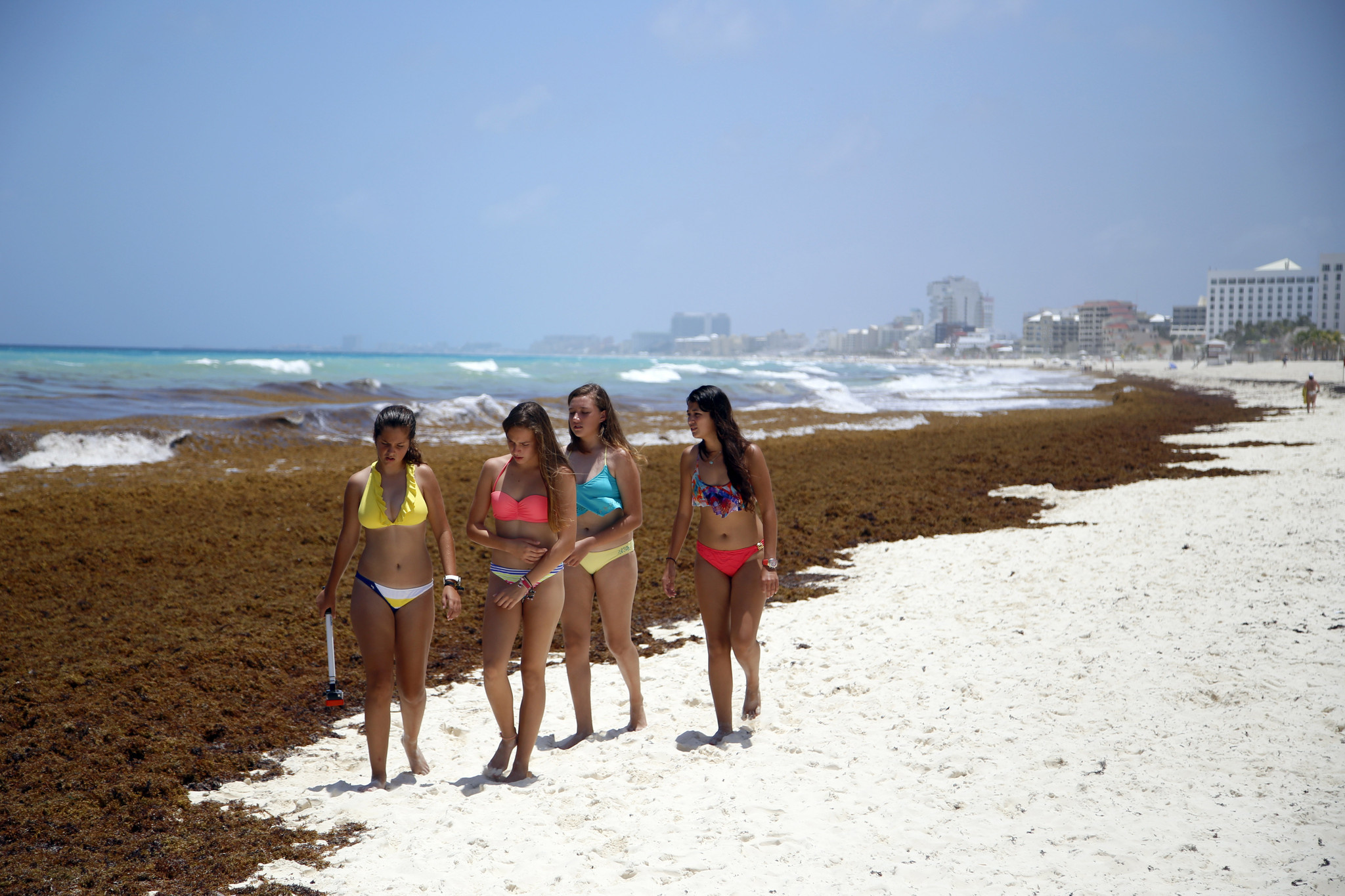 Stinking mats of seaweed piling up on Caribbean beaches ...