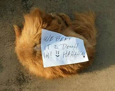 Pembroke Pines Dead Dog Found With Cruel Note On Its Body