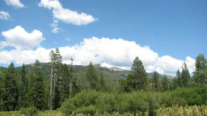 Sierra Nevada parcel will test ways to reduce mega fires and increase snowpack