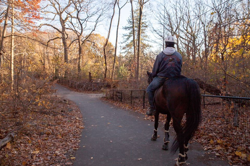 Skipping Central Park S Carriage Rides Try These 5 Nyc