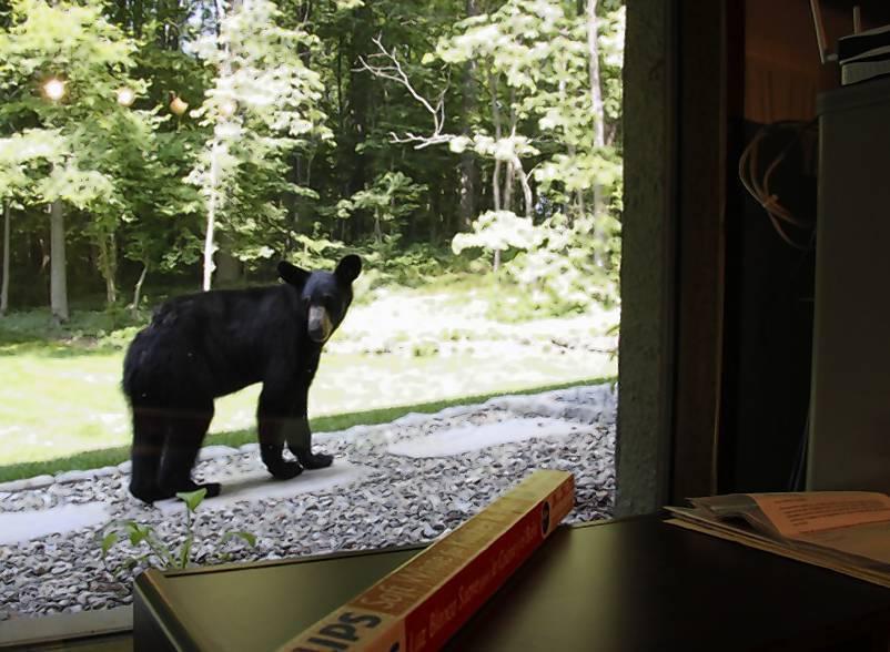 Black Bear Struck And Killed On State Line Pennsylvania