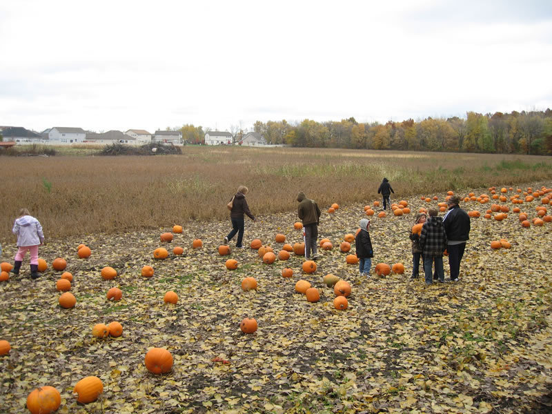 pumpkin patch lake forest il
