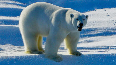 Exxon's damaging denial on climate change
