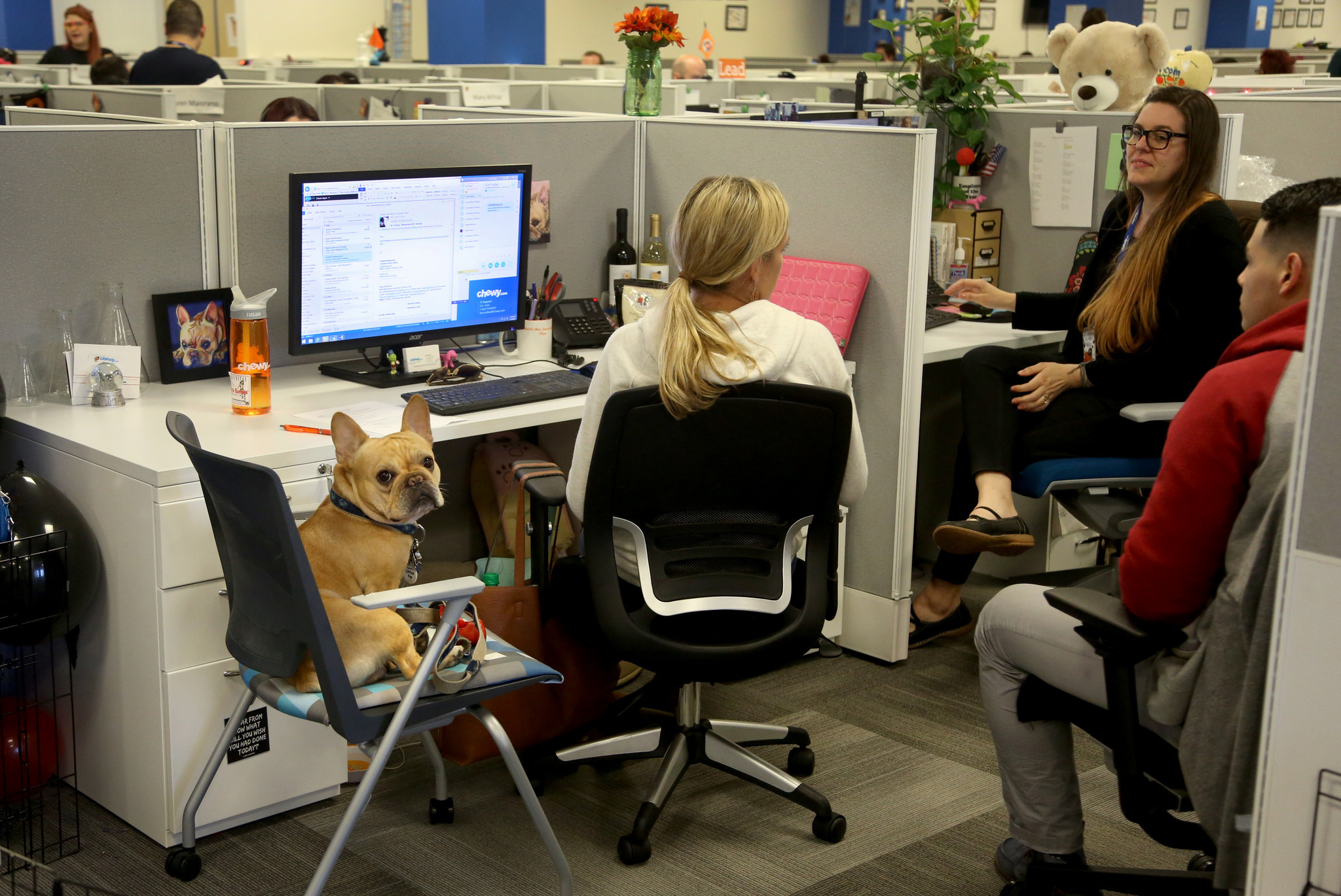 Online Pet Retailer Chewy Com Increasing Business Jobs In
