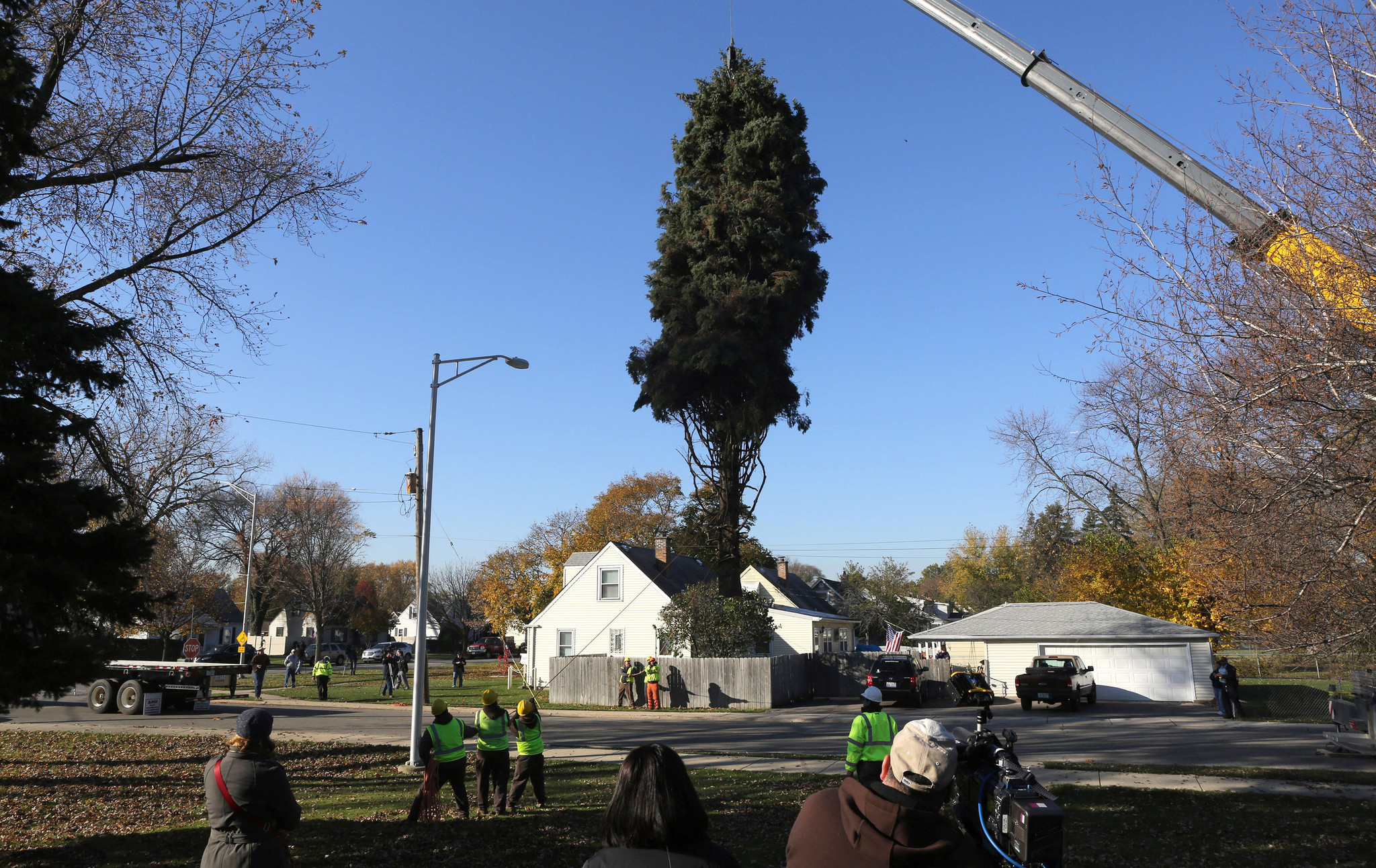 Christmas Trees To Cut Down