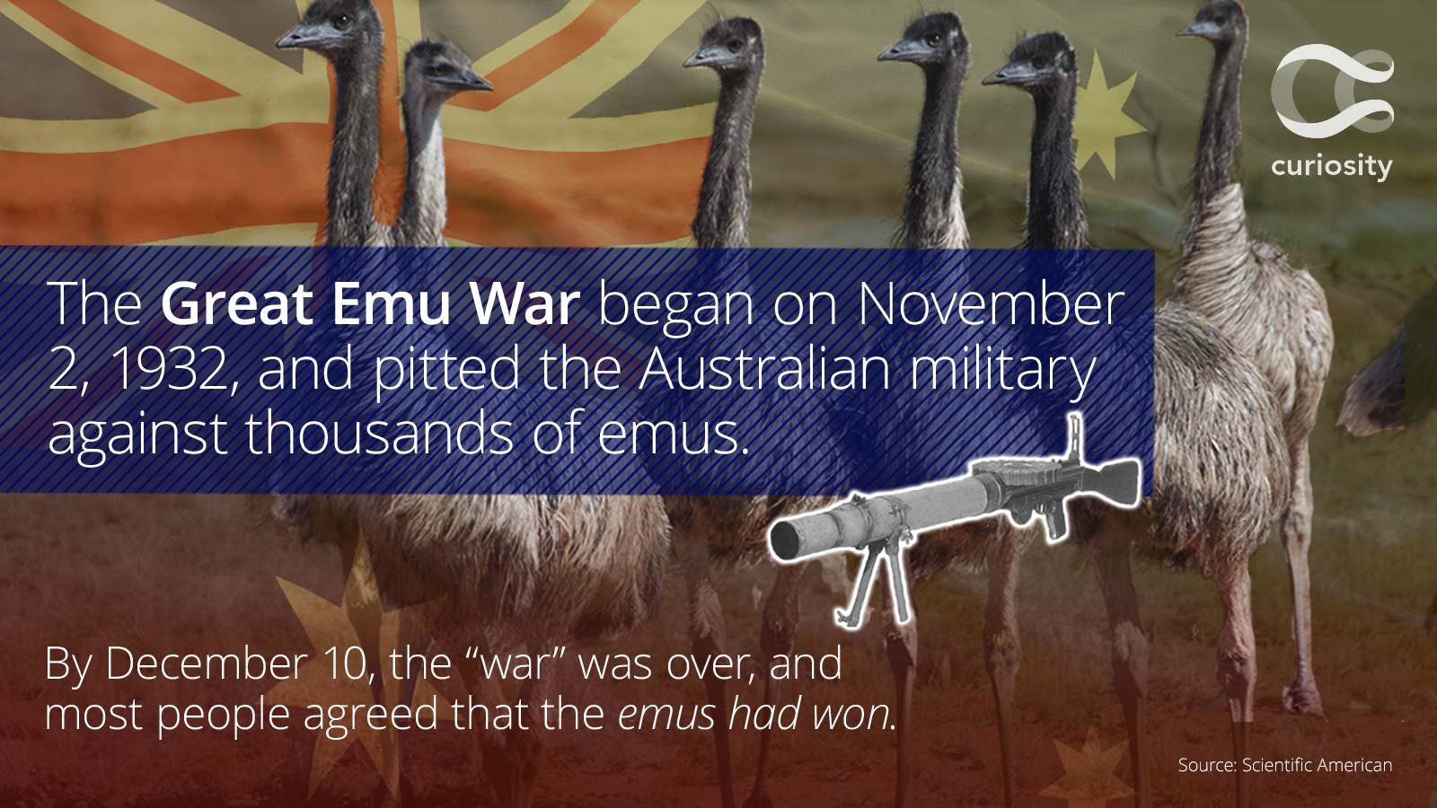 Farmers Only Reviews >> Who won the Great Emu War? - RedEye Chicago
