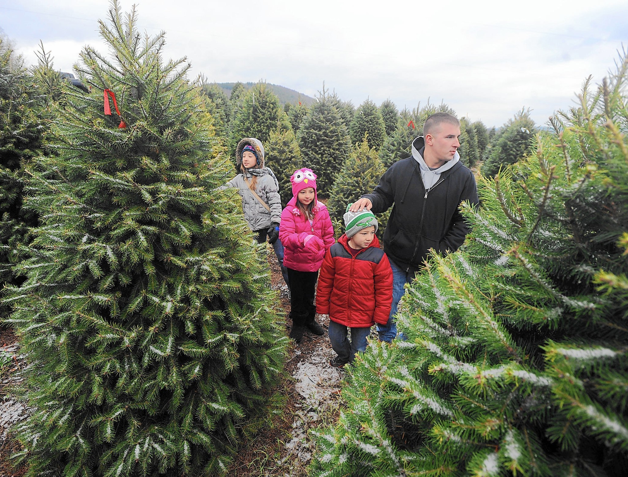 Tips For Picking The Right Christmas Tree