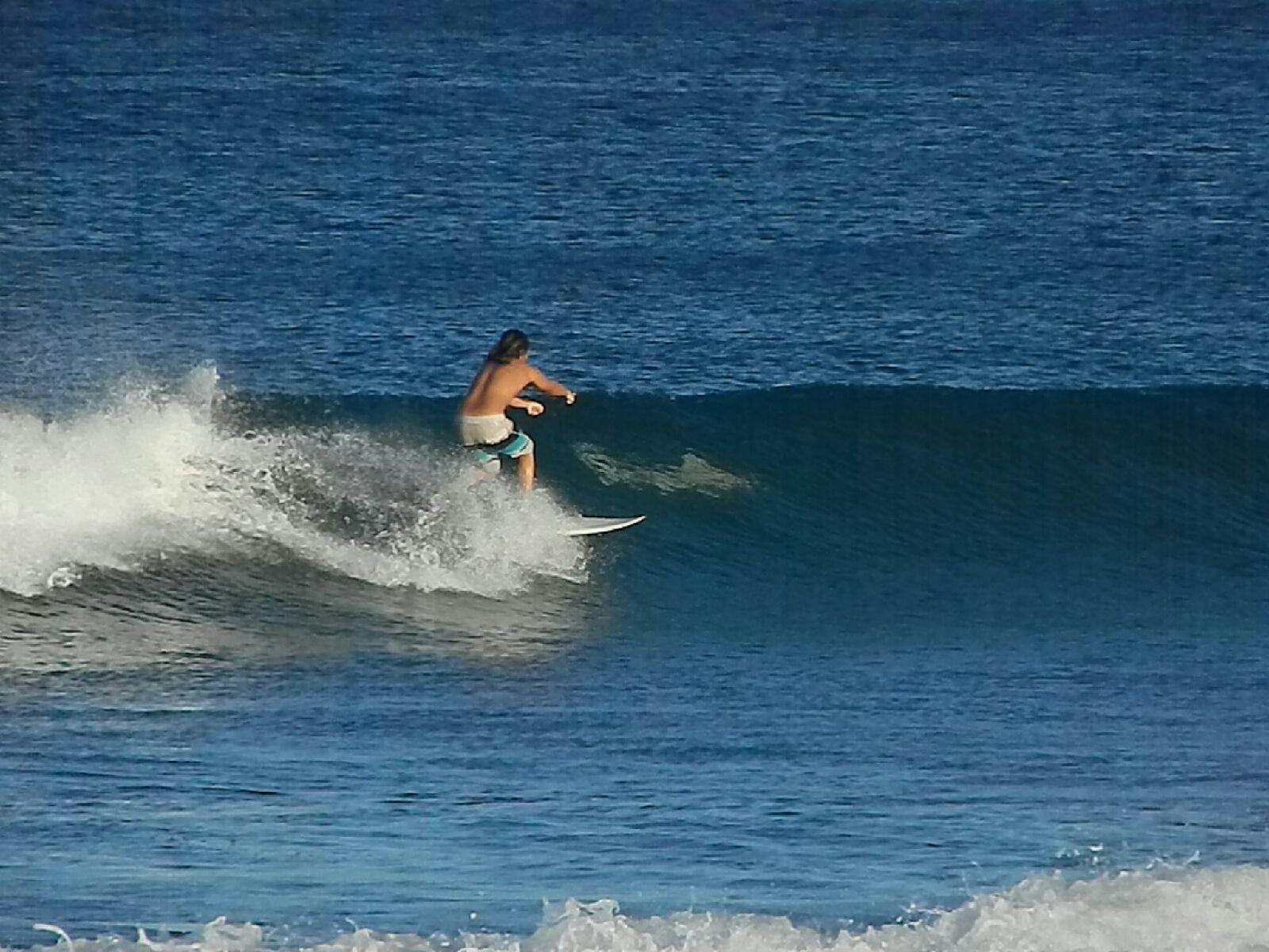 Requin West Palm Beach