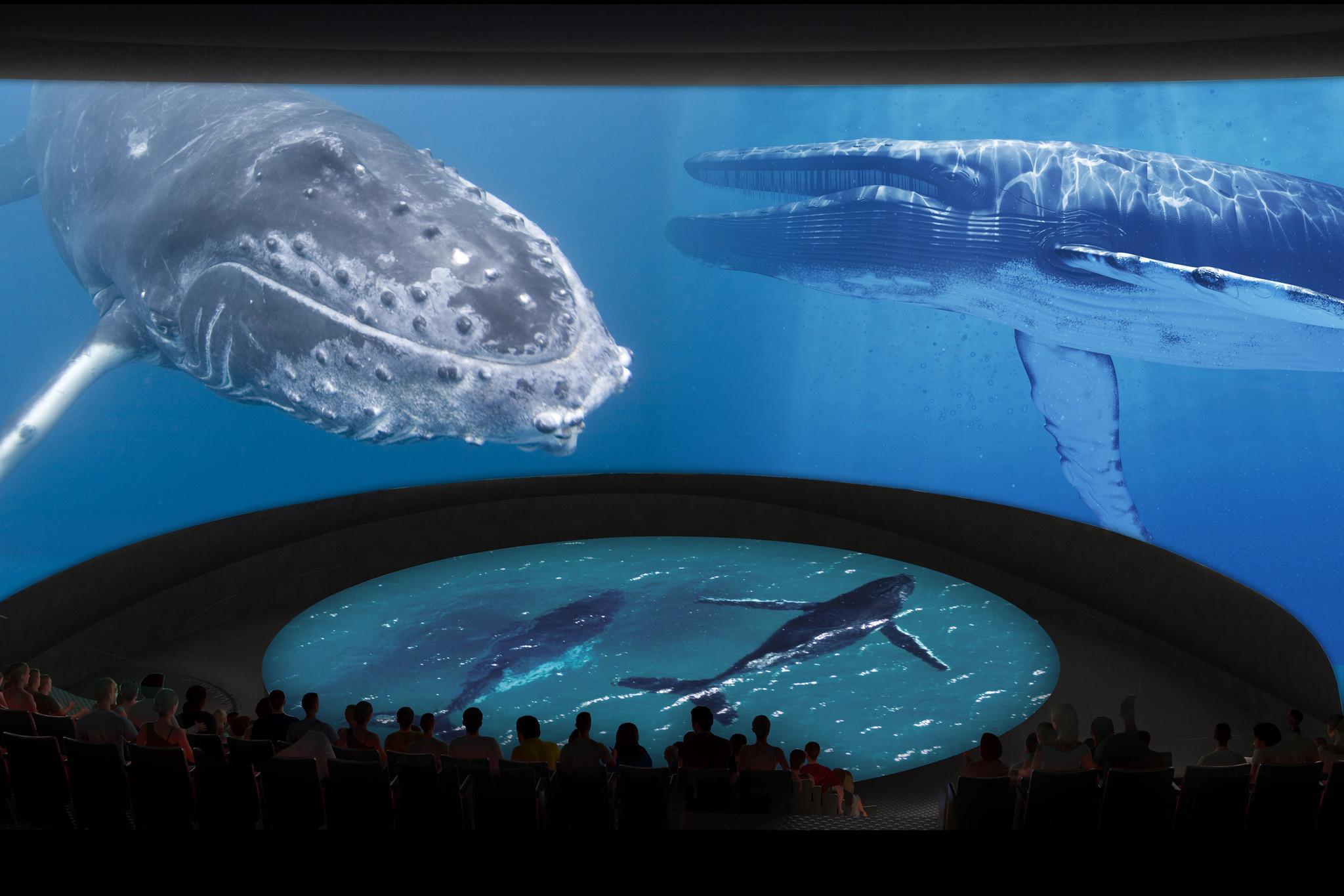 Long Beach Aquarium Expansion La Times