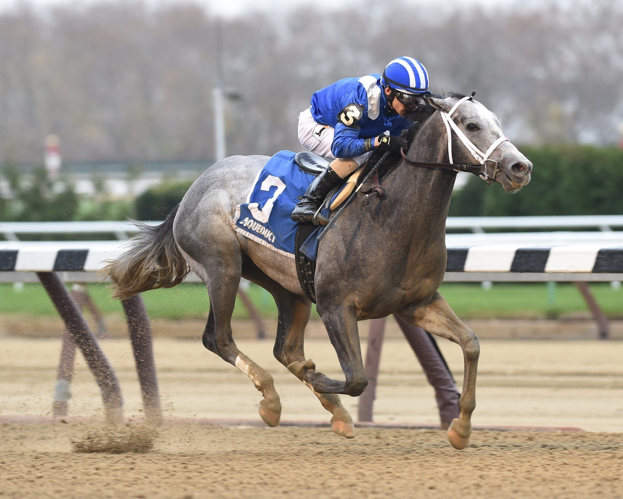 Florida Derby Draw Nyquist Mohaymen Tower Over 8 Rivals
