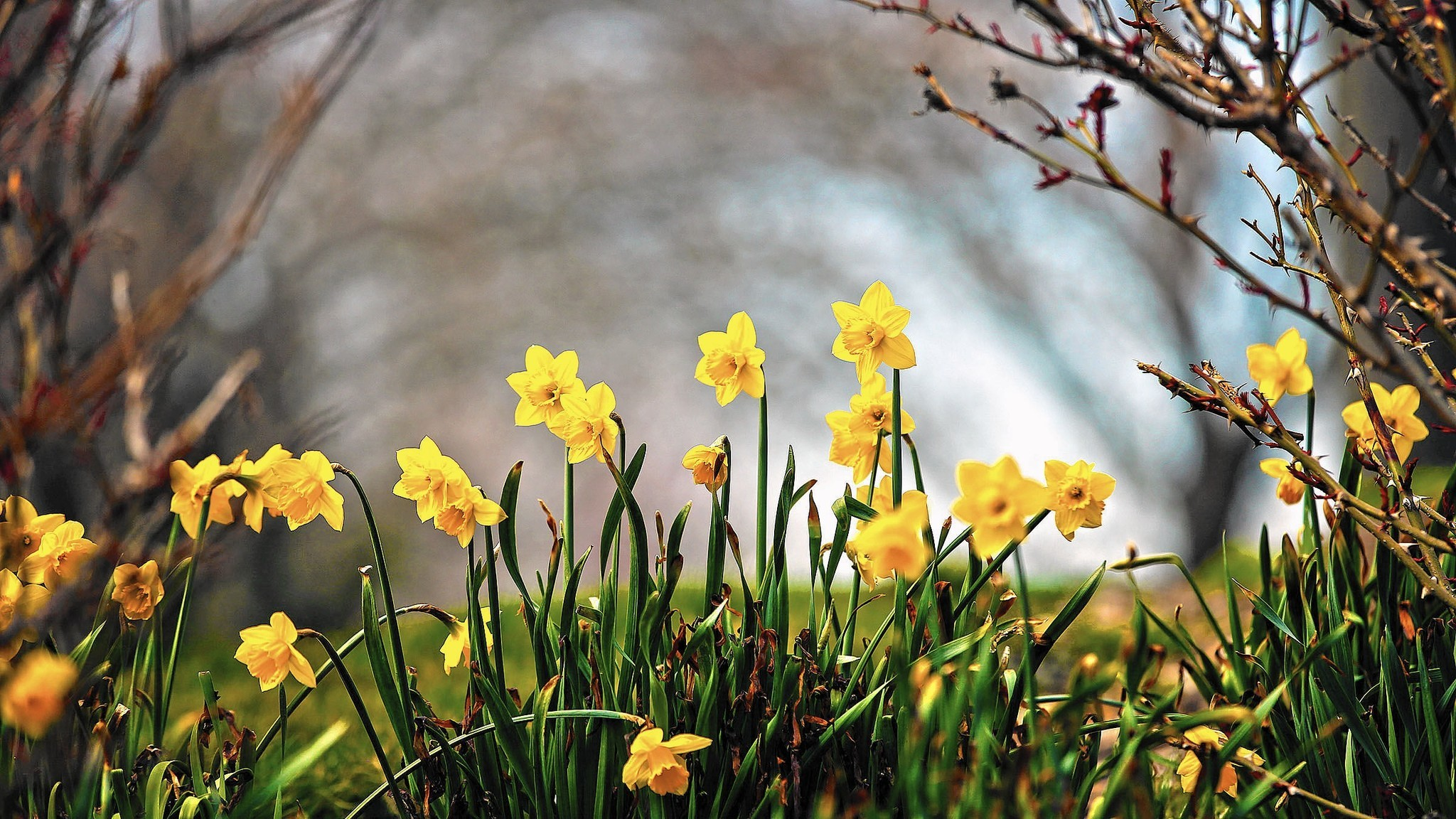 Gardening What Are The Effects Of Early Spring Weather