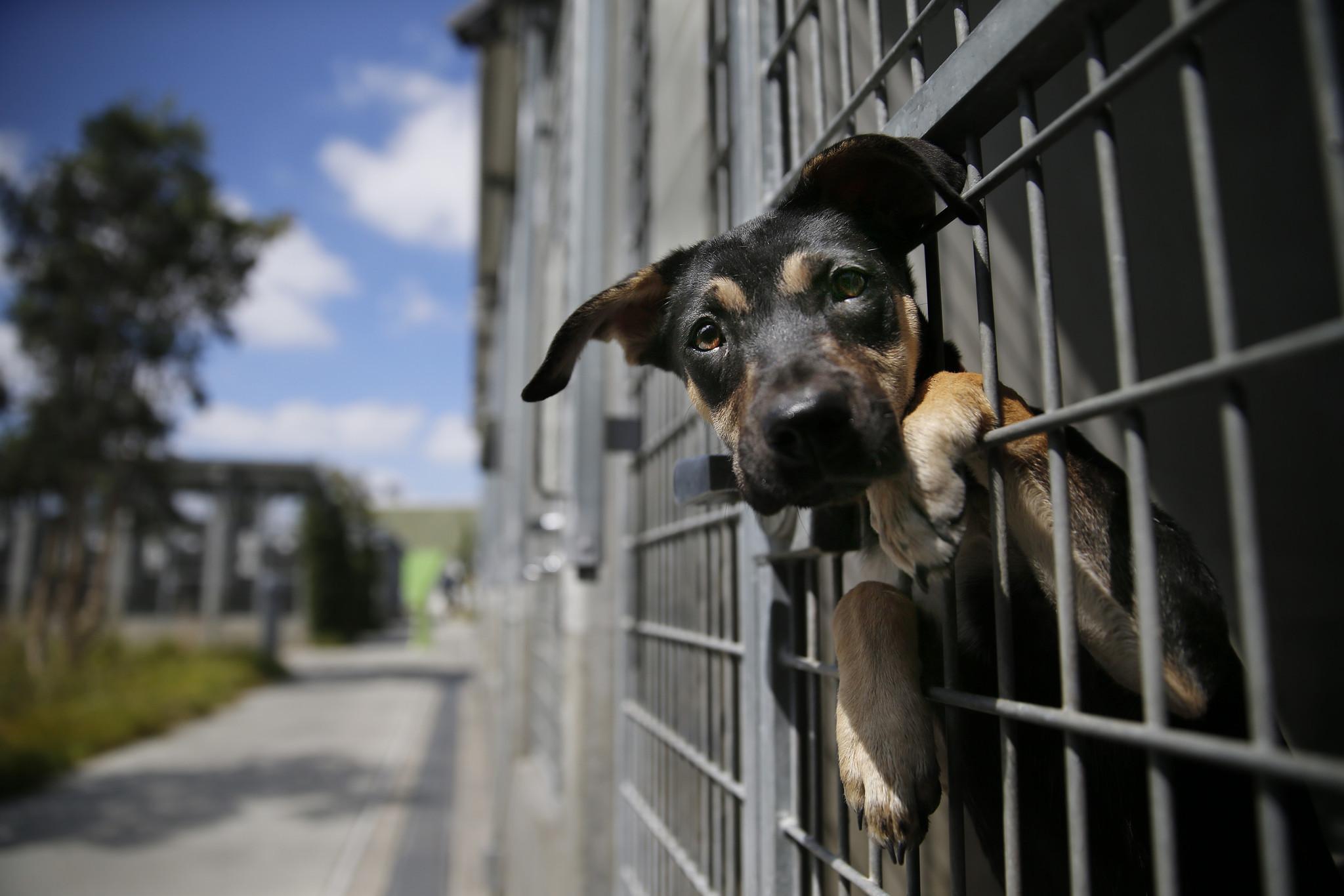 Animal Control & Enforcement