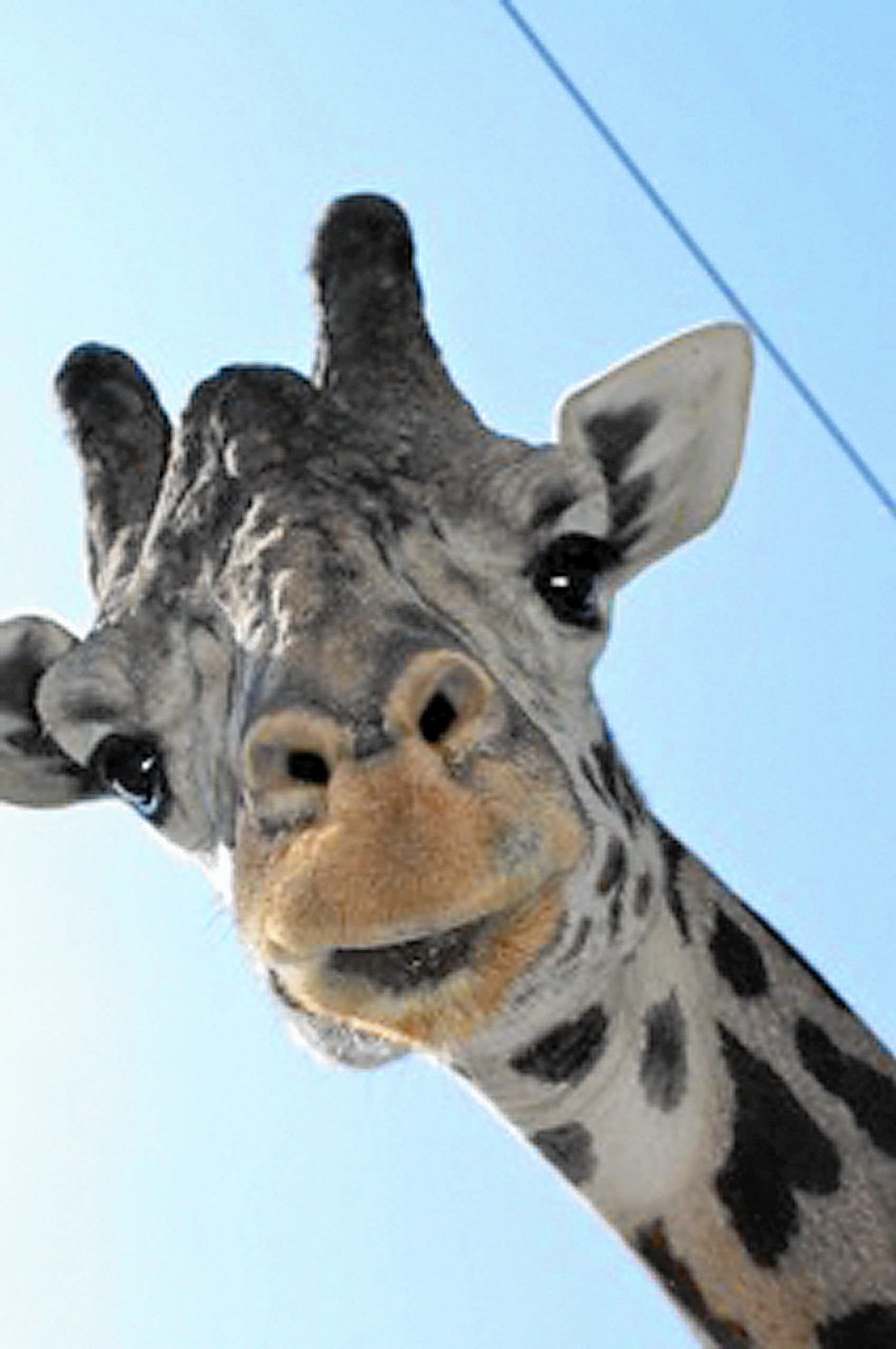 Image result for lehigh valley zoo