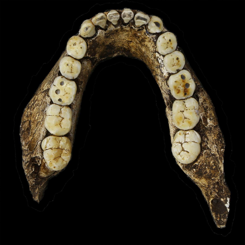 Homo naledi mandible
