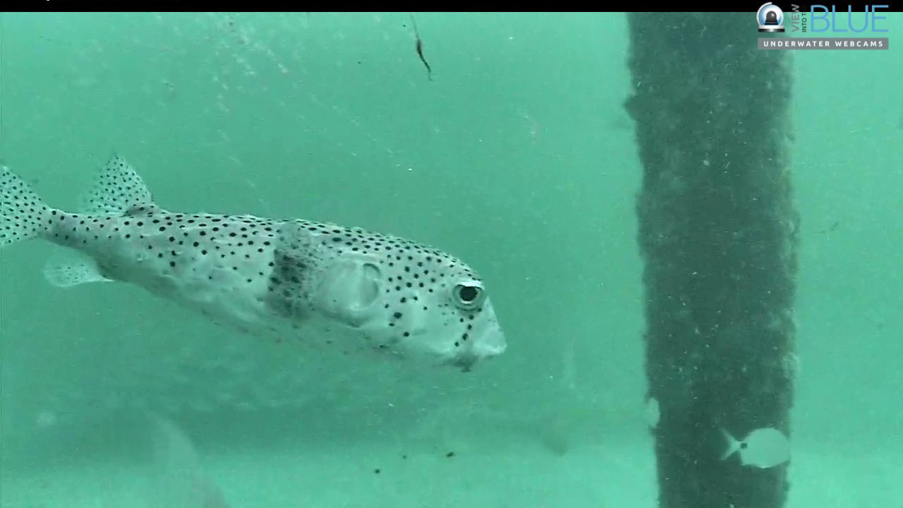 Underwater Camera Showing Little Fish Bring In Huge Internet Viewership Sun Sentinel