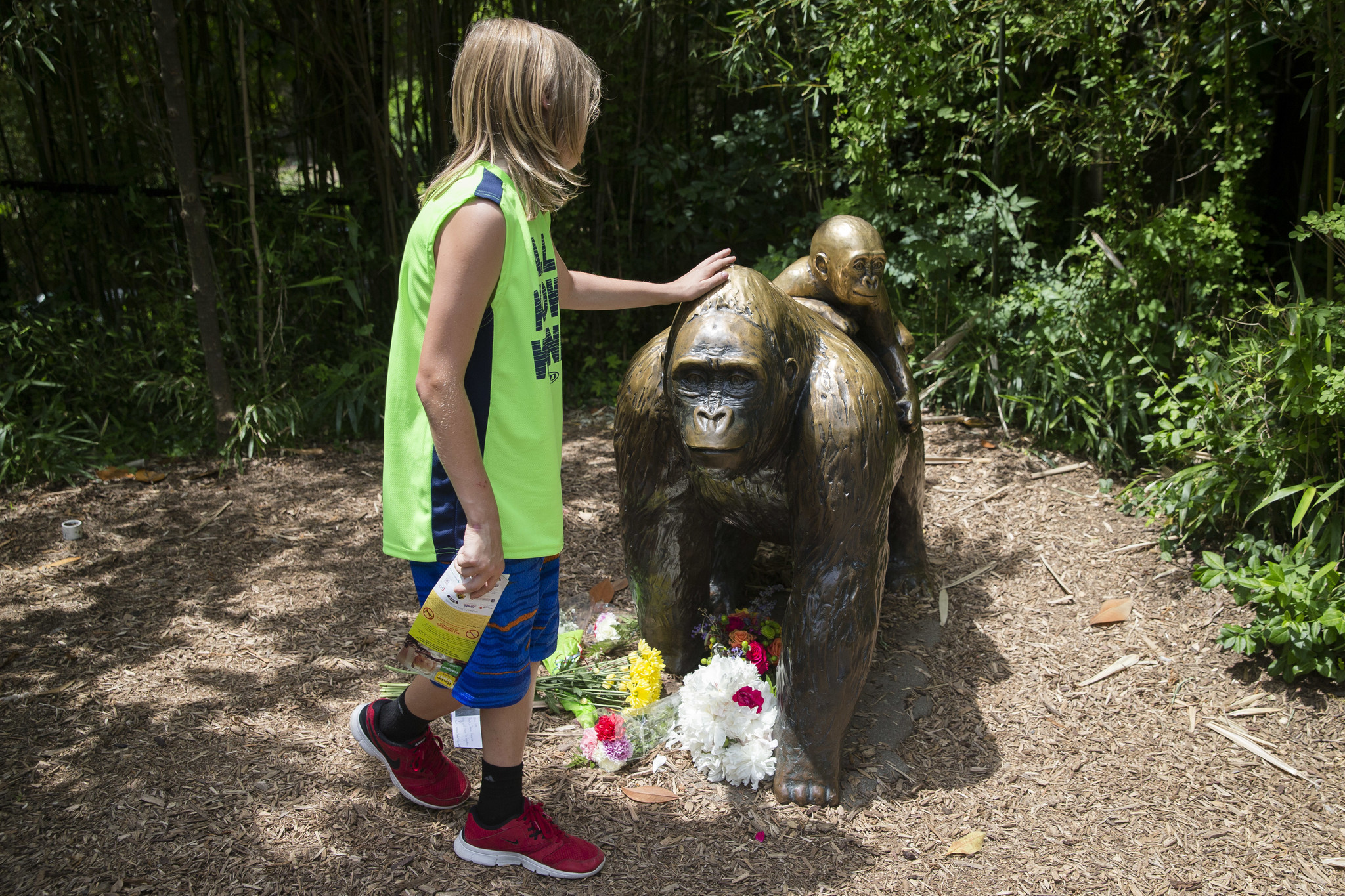 what s clear in cincinnati zoo case harambe had to die chicago