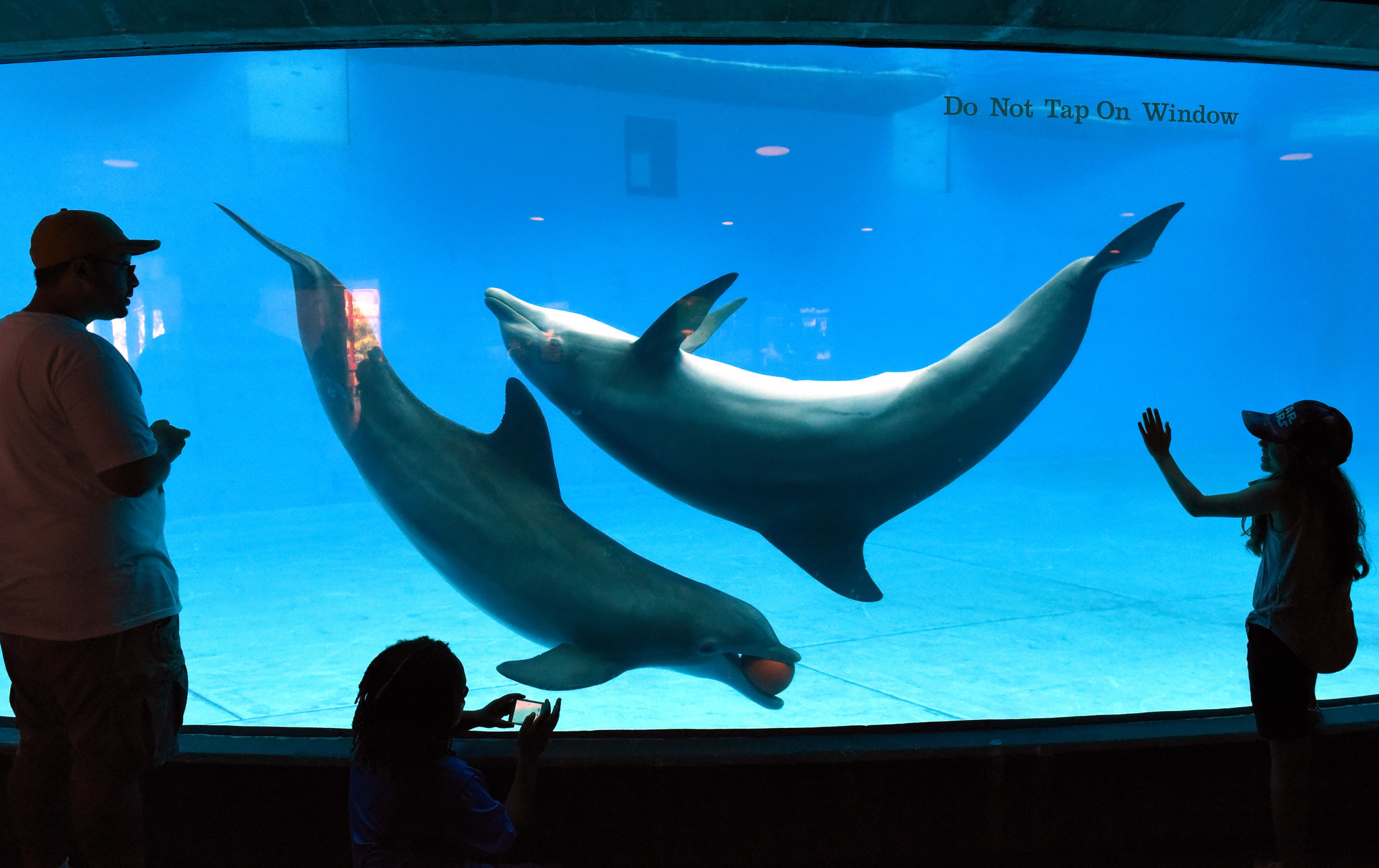 National Aquarium will move dolphins to a sanctuary by ...