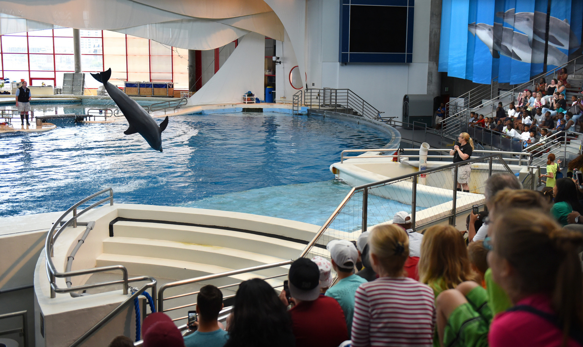 Baltimore reacts to dolphins leaving National Aquarium ...