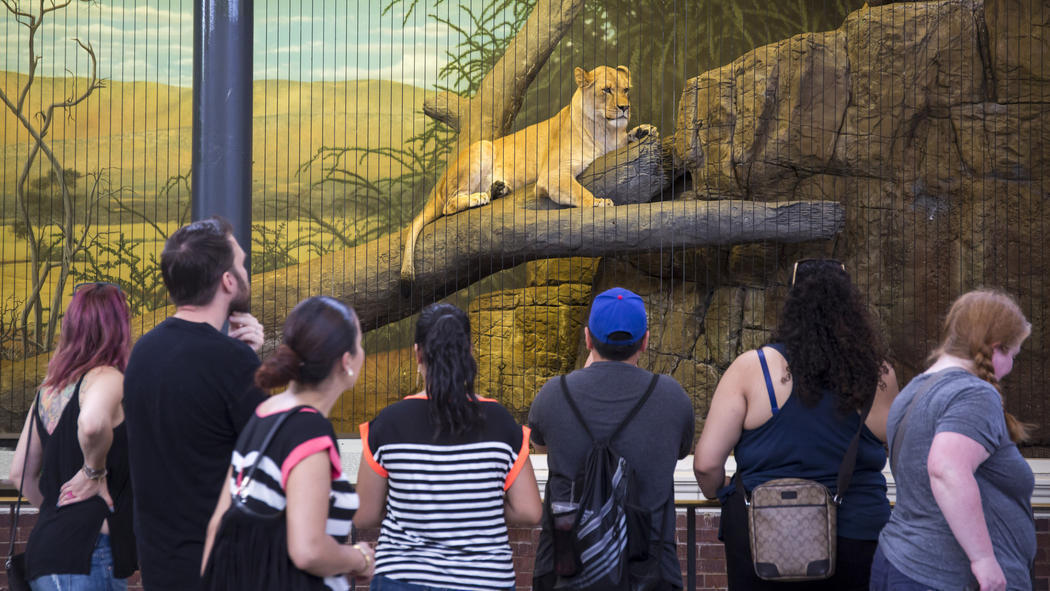 North Park Lincoln >> Lincoln Park Zoo's Lion House to get makeover, shed tigers ...