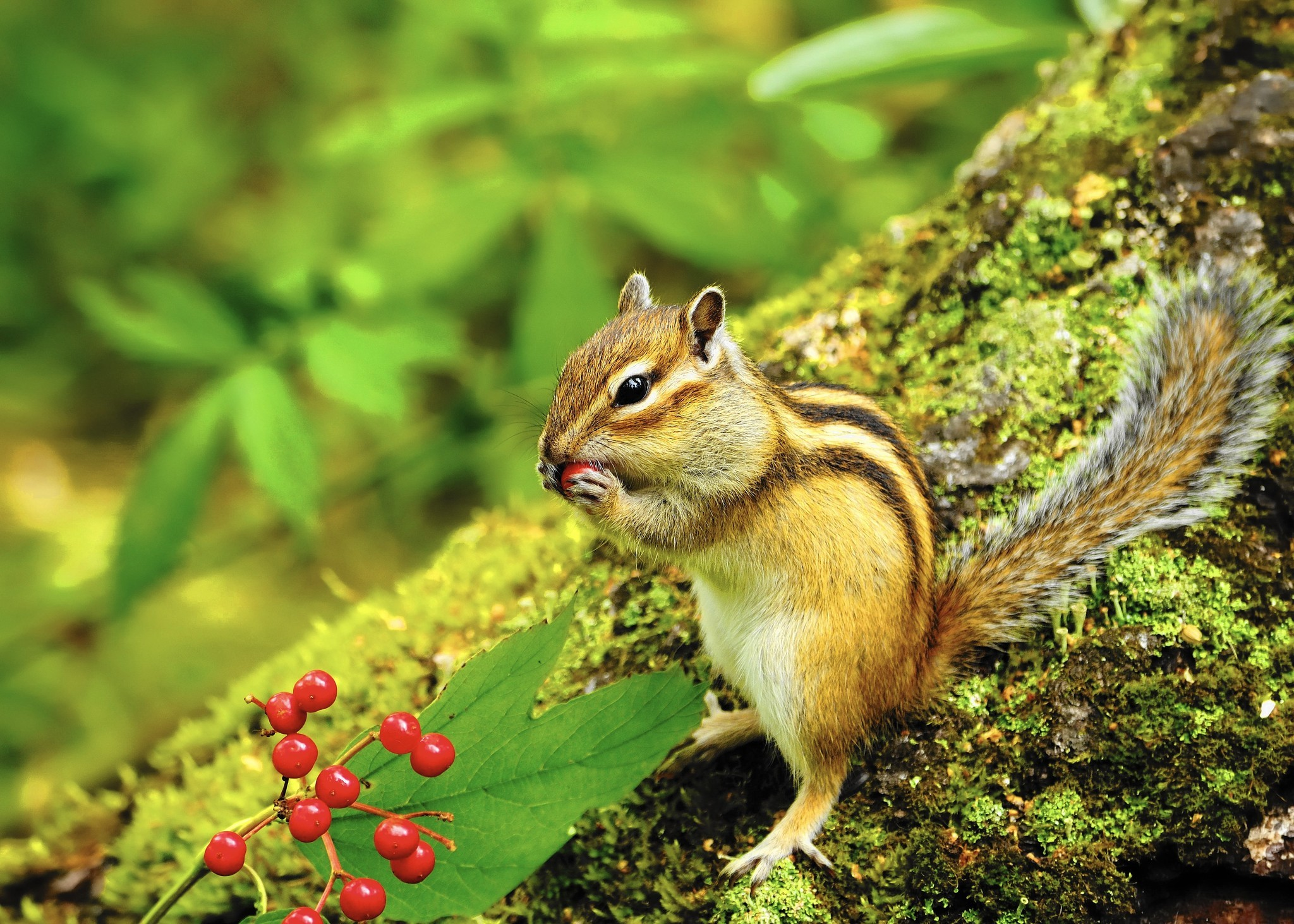 Tips For Coping With Those Pesky Chipmunks Hartford Courant