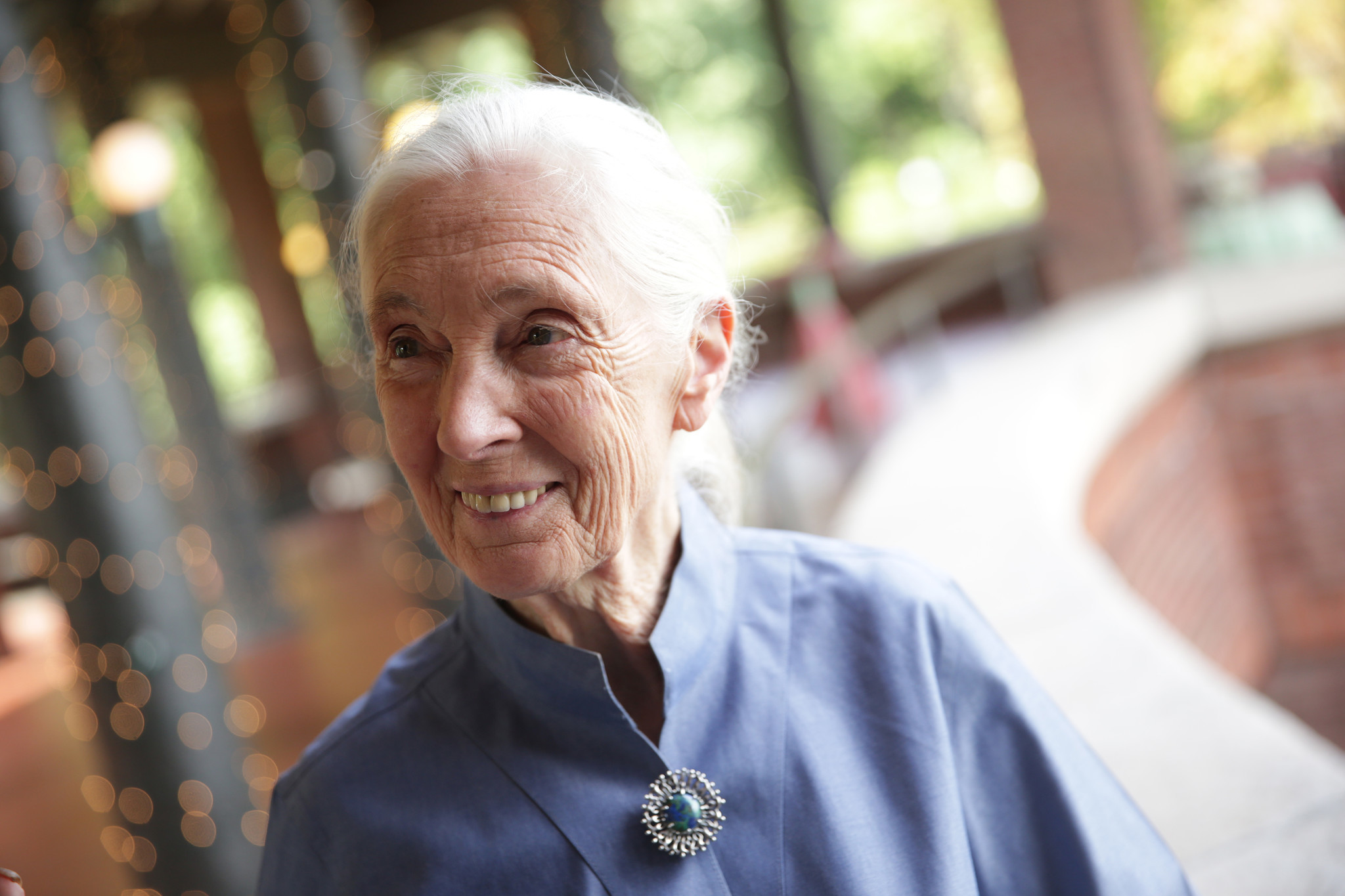 Living In A Van >> Jane Goodall, in Chicago to talk about chimps, stresses urgency - Chicago Tribune