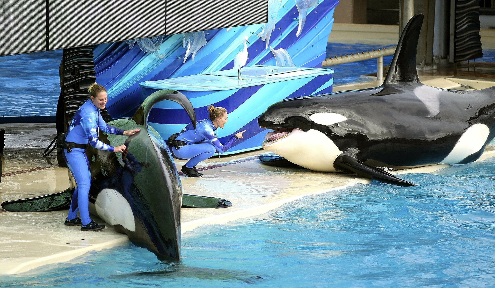 seaworld intends to replace shamu show with a new orca experience in