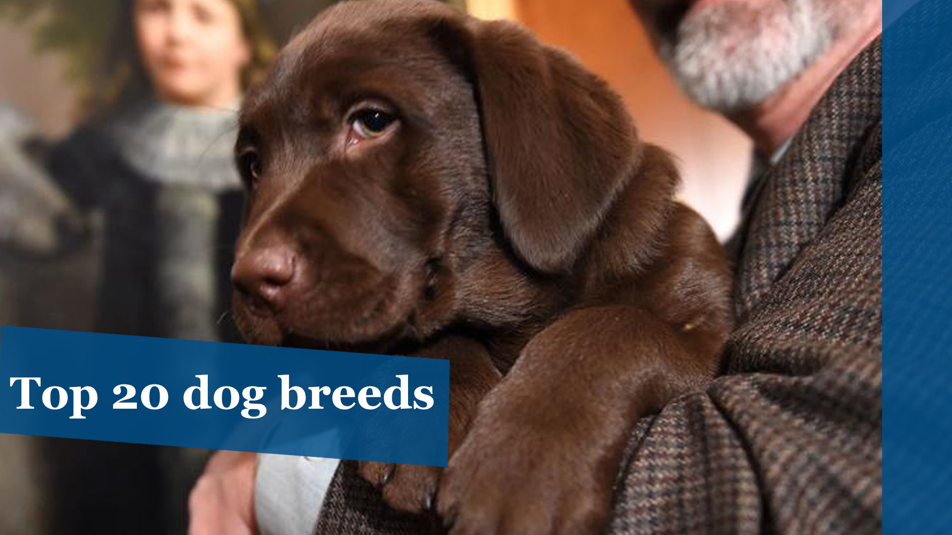 America S Top 20 Dog Breeds Chicago Tribune